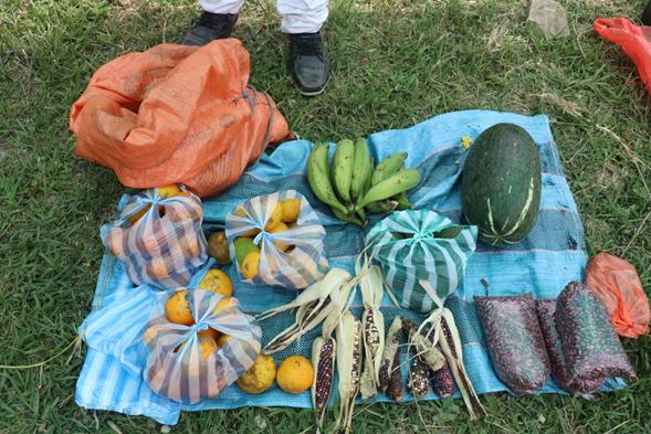 Intercambio de productos, semillas y saberes ancestrales, se realizó en territorio de Toribio, Zona Norte del  Cauca.